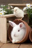 Rabbit and Chick Mini Ivory Satin Rabbit Sitting