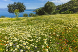Buy Spring Flowers in Zingaro Nature Reserve Near Scopello on This North West Coast at AllPosters.com