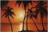 Buy Caribean Sunset at AllPosters.com