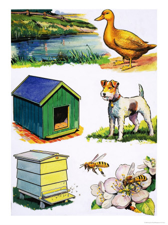 pictures of animals and their homes. Animals and Their Homes Giclee Print. zoom. view in room