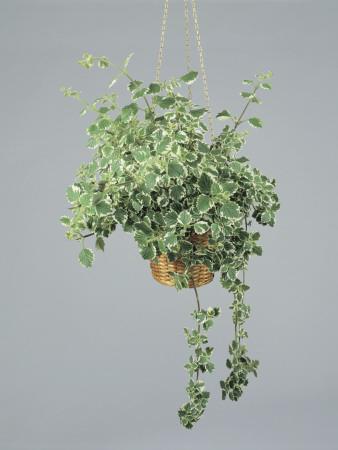 living scandi piante da balcone in piena ombra