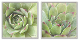 Garden Succulents Color Set
