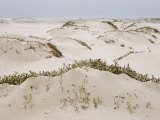 Padre Island Dunes Crested with Grass  White Capped Waves from the Gulf of Mexico Lapping at Shore