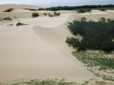 Padre Island Dunes  TX