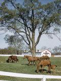 Calumet  Horse Farm