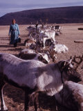 Woman with Her Herd of Reindeer in Outer Mongolia