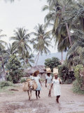 Group of Haitian Woman and a Donkey Walking Down a Dirt Road
