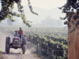 Workers on a Tractor at the Conchay Toro Vineyards  Chile