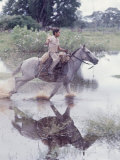 Cowboy Herding Zebu Cattle on Miranda Estanica Ranch  in the Pantanal of Southwestern Brazil