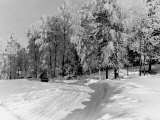Snow Covering Countryside Near Lake Ladoga