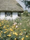 Russian Look of the Land Essay: Marygolds in the Garden of a Farm