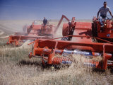 Harvester Combines at Work on Wheat or Oat Field of Farm Near Max North Dakota