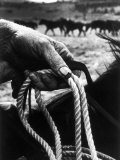 The Rough  Weathered Hand of an Oldtime Cowboy  Holding Rope