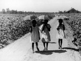 Three Young Barefoot African American Sharecroppers' Daughters on their Way to Sunday School