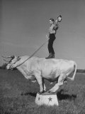 Boy Standing on Shorthorn Bull at White Horse Ranch