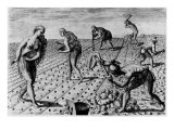Illustration of Native Americans Sowing Maize in Florida  Brief History of Florida
