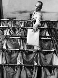 Man Sorting Mail in the State Dept Building  Each Bag is Labeled with Foreign City Destination