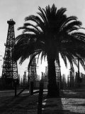 Billowing Palm Tree Gracing the Stark Structures of Towering Oil Rigs Papier Photo par Alfred Eisenstaedt