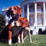 President Lyndon B Johnson's Pet Beagles  Him and Her  on the White House Lawn