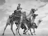 Arab Legionnaries Riding their Camels