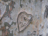 Heart Carved into a Tree Trunk