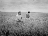 Men Walking Through the Wheat Fields