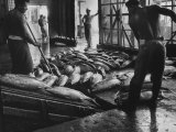 Tuna Being Unloaded from Boats at Van Camp Tuna Co Cannery in American Samoa