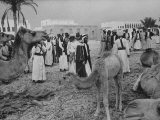 Camels Inspected by Sheik Shakhbut  Ruler of Oil-Rich Kingdom  with Other Arabs