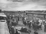 Tibetan Refugees Arriving at Missamari Camp