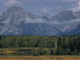 Herd of Elk Grazing in Meadow Framed by Peaks of the Grand Teton Mountains