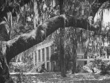 Trees Covered with Spanish Moss Standing in Front of Large Plantation House