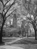Men Wearing Suits Walking Along a Tree-Lined Path on the Campus of Yale University