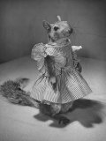 Squirrel Wearing a Baby Doll's Dress