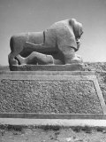 Lion in the Ruins of the Temple of Nebuchadnezzar in the Ruins of Babylon