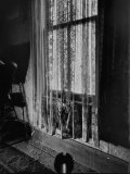 Cobwebs Attached to Curtain at Window in Alleged Mass Murderer Ed Gein&#39;s House