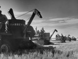 Combines Being Used to Harvest Wheat