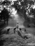 Dog Trainer Paul Bakewell Iii Taking Dogs for a Run