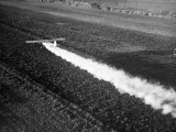 Plane Spraying Alfalfa Fields in Imperial Valley with Ddt