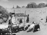 Native American Indian Children Watching over their Sheep in the Desert