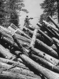 Man Lifting Logs Out of a Lumber Pile