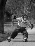 Performing Chimpanzee Zippy Riding on Skates Papier Photo