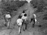 Coffee Workers Walking Along a Path Through the Fields