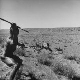 Bushman Throwing His Spear at a Winded Gemsbok  While His Dogs Circle It