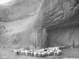 Native American Indian Herding His Sheep in Desert