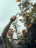 Astronaut Michael Collins Pruning His Rose Bushes at Home