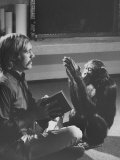 Dr Roger Fouts Attempting to Teach Lucy the Chimpanzee American Sign Language