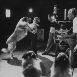 Child Actor Tommy Ruddick  Acting on TV Program with Lassie