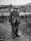 An Old Man Standing in Sheep Pen
