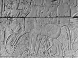 Carving of a Horse on Wall of Temple Built by Ramses II at Abydos