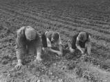 The Eldest Boys Helping their Father in the Farm Fields